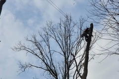 Tree-Service-Indianapolis_0003_2