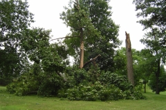 fallen-trees-wind-damage