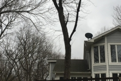 Tree Service Indianapolis - Before