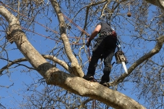 Tree Service Indianapolis