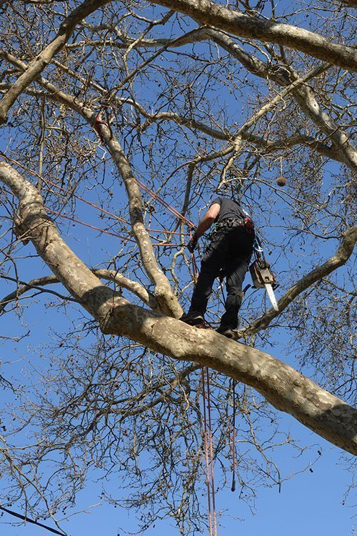 Tree Service Indianapolis Image