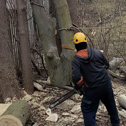 tree removal service Fishers image