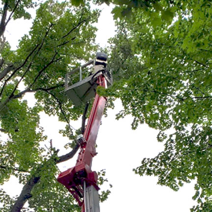 Tree Removal Indianapolis and Fishers and Surrounding Cities Image