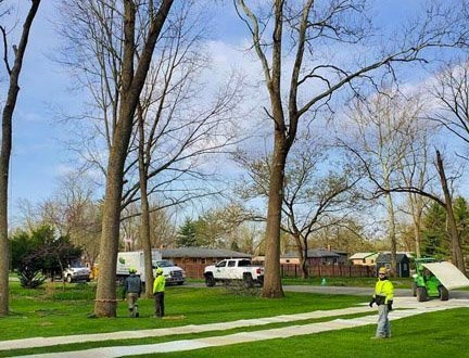 Tree Service and Tree Removal Company Indianapolis image